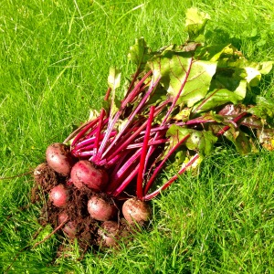 beetroots-homegrown